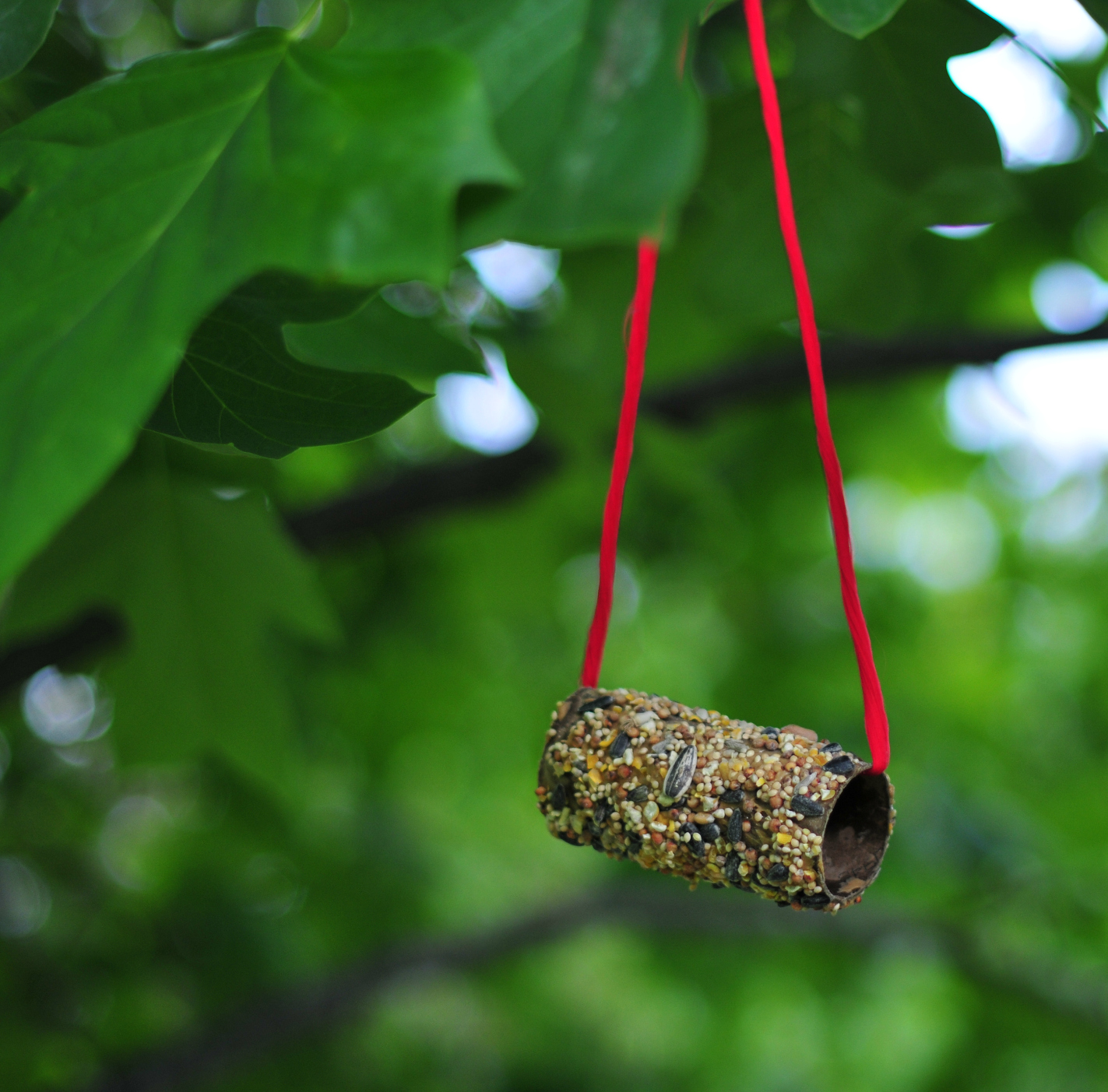 toilet paper roll bird feeders the neighborhood moms